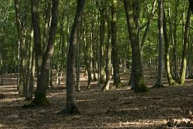 deciduous woods jpg 3 436 2 300 pixels carnival ref
