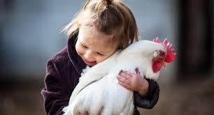 animali da cortile definizione gallina e pollaio nell evoluzione rapporto tra uomo e animale