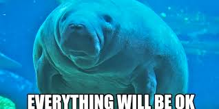 Manatee Meme - don t panic calming manatees are here to help the daily dot