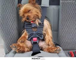 Dog In Car Meme - a dog in a car seat memey com