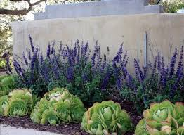 Arizona Landscaping Ideas by Best 25 Inexpensive Landscaping Ideas On Pinterest Yard