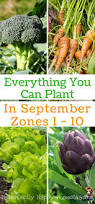 3703 best grow food not lawns gardening tips and ideas images
