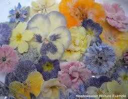 edible flowers for sale meadowsweet flowers crystallised edible flowers