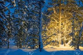 snowy christmas pictures christmas fairytale in the snowy forest winter night and christmas