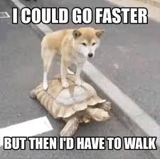 Lazy Meme - cool don t be lazy meme segerios com segerios com