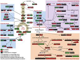 a metabolic profiling strategy for the dissection of plant defense
