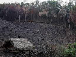 these farmers slash and burn forests u2014but in a good way
