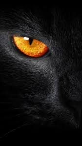 best black panther iphone wallpaper for windows 7 wallpaper with