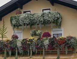 balkon blumen so schöne balkonblumen klagenfurt meinbezirk at