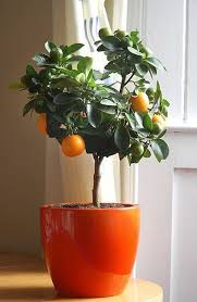 fruit plants to grow indoors or outdoors as well