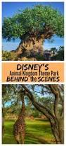 Map Of Animal Kingdom Disney U0027s Animal Kingdom Theme Park From Behind The Scenes