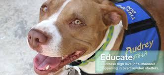 boxer dog adoption los angeles angel city pit bulls los angeles dog rescue