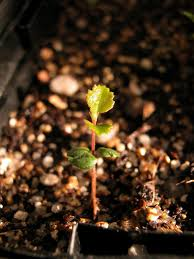 general houseplant care articles gardening know how