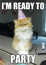 Unamused Cat Meme - 50 best collection of party memes