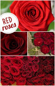 wholesale roses floral friday roses dreisbach wholesale florists