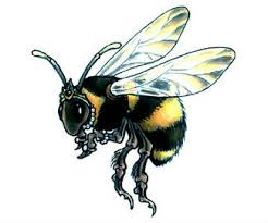 queen bee tattoo design by gail somers future ink for me