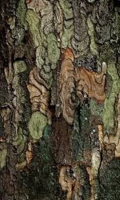 wonderful tree bark details resemblance to a camouflage fabric