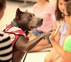 american pitbull terrier akc 21 times pit bulls were good people