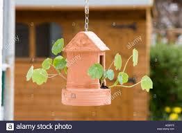 hanging terracotta garden ornament garden shed in background stock