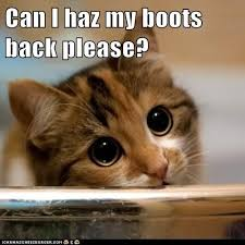 Puppy Eyes Meme - can i haz my boots back please lolcats lol cat memes funny