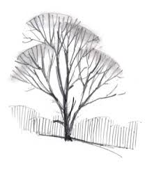 how to draw trees in winter john muir laws