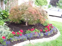 red geraniums u0026 blue lobelia with japanese maple tree stone