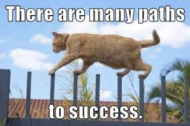 Success Cat Meme - daily announcements mlll 4993 indian epics 995 spring 2018