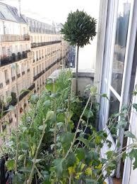 amenagement terrasse paris aménagement paysager d u0027un balcon filant à paris l u0027aurey des