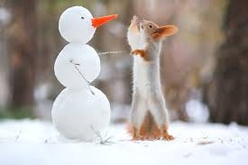 red squirrel makes friends with a tiny snowman and blue in