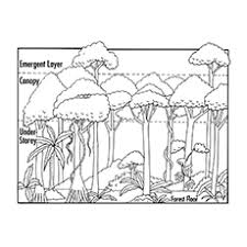 free coloring page of the rainforest printable nature coloring pages for your little ones