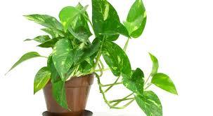 plante dans la chambre 10 plantes que vous devriez avoir dans votre chambre pour mieux dormir