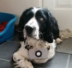 Halo For Blind Dogs New Echo Locating Device For Blind Dogs Now Available To The