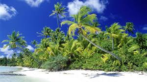 Palm Tree Wallpaper Full Hd P Palm Trees Wallpapers Hd Desktop Backgrounds Hd