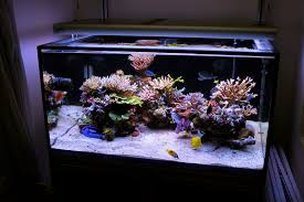 Reef Aquascape Designs Aquascaping Show Your Skills Page 11 Reef Central Online