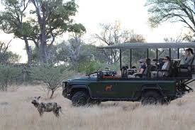 african safari car tammie matson the awesome okavango