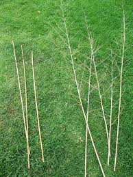 andie u0027s way taming the tomatillo bamboo trellis