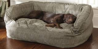 Dog Bed Furniture Sofa by Dog Sofa Bed Costco Furniture Pinterest Dog Sofa Bed Costco