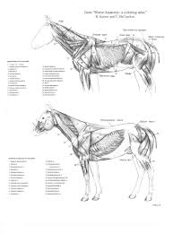 Dog Stifle Anatomy Horse Face Anatomy Image Collections Learn Human Anatomy Image