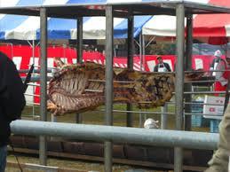 駲uiper sa cuisine 高森食肉フェアーにて撮影した画像です soliloquy of dragoon