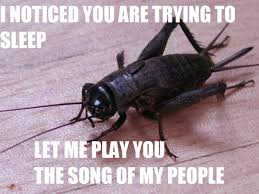 Crickets Meme - cricket insect funny memes how to avoid a dui pinterest