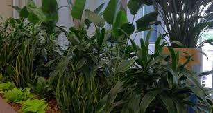 kansas city greenery beautiful indoor plants flowers kaf mobile