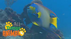 fish animals for children kids videos kindergarten preschool