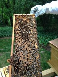 backyard beekeeping rocks me like pinterest backyard beekeeping