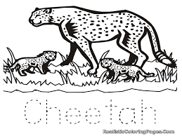 most graceful u0026 fastest animal on earth cheetah coloring pages