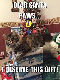 Christmas Cat Memes - 13 best cute cats images on pinterest cute cats kawaii cat and