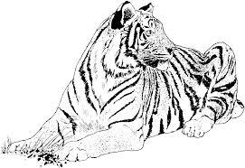 snow tiger coloring page big cats coloring pages snow tiger colouring pages throughout tiger