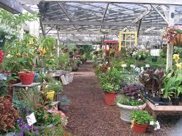 native plant nursery illinois sunnyfield greenhouse u0026 garden center enjoy illinois