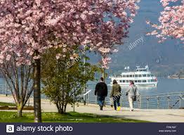 rhine promenade in bingen am rhein bloom of ornamental