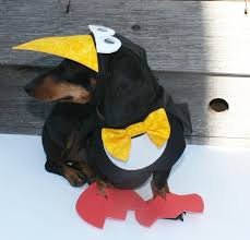 Halloween Costumes Etsy 17 Halloween Costumes Images Pet Costumes