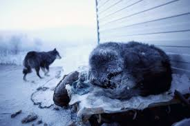 Oymyakon Map 21 Amazing Photos That Show What Life Is Like In The Coldest